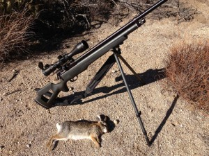 hunting rabbits with air rifle