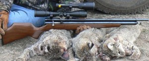 hunting with air rifle