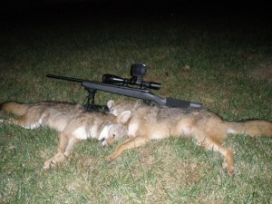 coyote hunting scope
